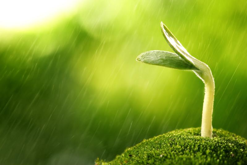 「穀雨」節氣名稱源自古人「雨生百穀」之說。指雨水增多,大大有利於穀類農作物生長。(fotolia)