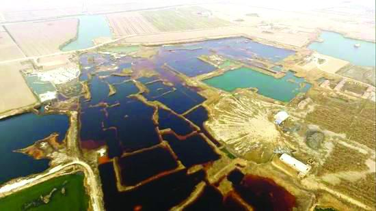 【圖片新聞】華北現30萬平米工業污水滲坑