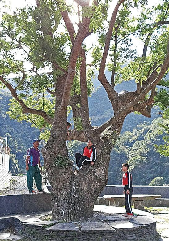 霧台國小體育老師正在講述祖先們如何爬樹的歷史,並讓學生實際體驗。
