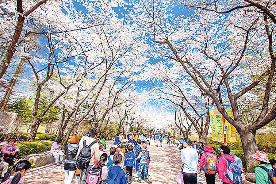 市中心就能賞 花首爾春花道路集錦