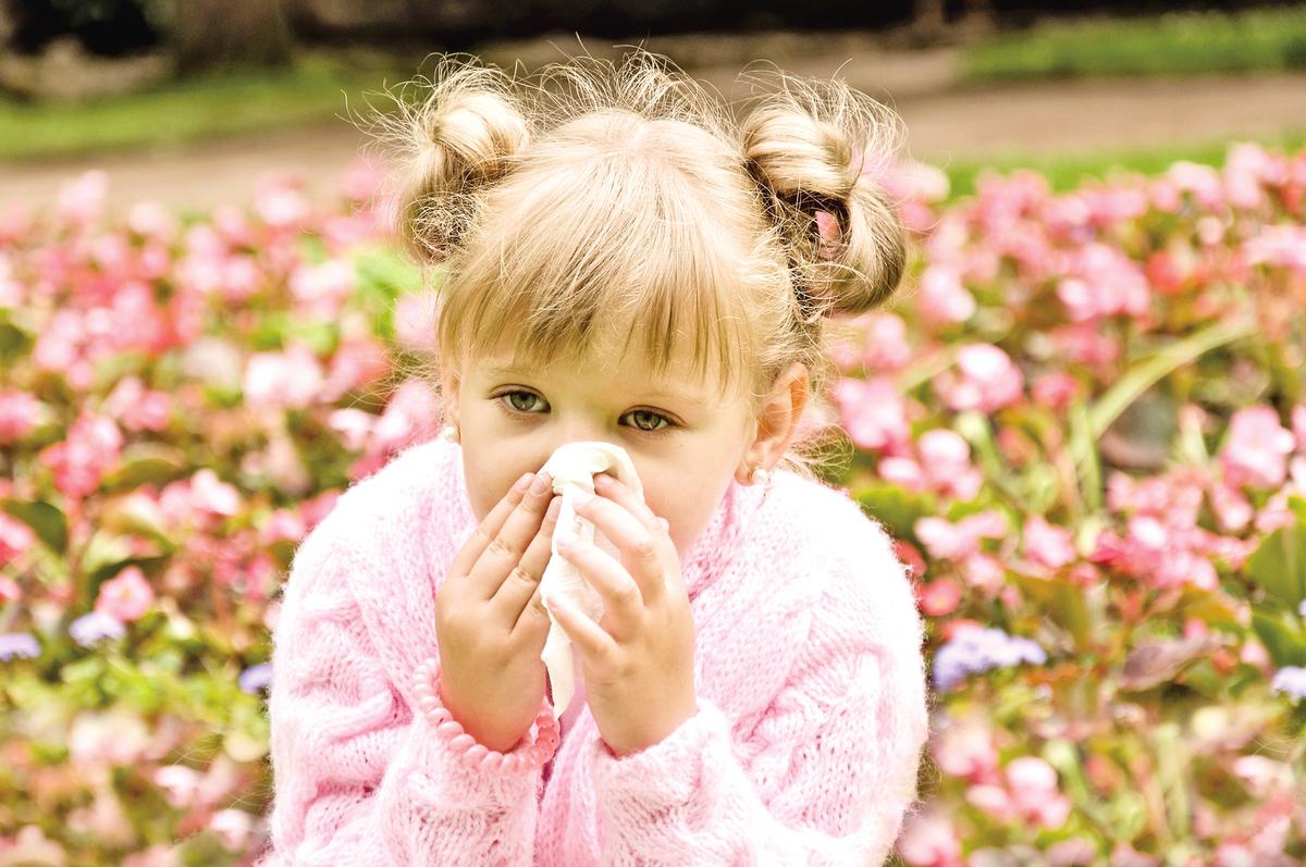 門診中常遇到家長說他的小孩感冒1、2個月仍未見好轉,經常鼻塞、打噴嚏、流大量清水樣的鼻水,一躺下來睡覺就咳嗽,特別在入睡前或晨起時,咳嗽最為劇烈。  小孩感冒了,多數家長通常都先帶子女去看西醫門診,等到發現症狀一直無法改善時,才想到求助中醫療法。而中醫門診發現不少案例其實不是感冒,而是過敏性鼻炎。  中醫治療過敏性鼻炎完全是針對體質進行調整,從整體出發,內外兼治。在辨證的基礎上,以「內治法」治其本,恢復臟腑功能,以「外治法」調理氣血或直達病所。在治療過程中,患者不但鼻子過敏的症狀改善了,連抵抗力也變好了,精神體力變佳了,感冒發燒的頻率更降低了,這是常見的現象。  中醫內外兼治 讓你好好呼吸  辨證:  從中醫的角度來看,過敏性鼻炎主要是由「肺脾腎三臟器虛損、風寒乘襲」所導致的,它的主要病理和臨床表現為「津液代謝障礙」,特徵是「噴嚏、清涕、鼻塞」。  療法:  中醫調理患者的體質時,善用中藥從內外兩路夾攻病魔,以改善病情。  不同體質的患者各有其特定的病因病機、臨床證候,而不同的傳統方藥各具獨特的整體調節功能;中醫「對證治療」,因此用藥會有差異。儘管如此,各種不同方劑的應用,都以調整「津液代謝」為最終目標,療效顯著且持久。  以下是「內治法」的用藥概況:  外感症狀表現明顯者,用桂枝湯、麻黃附子細辛湯、小青龍湯、川芎茶調散、人參再造散或麻杏石甘湯。  虛證表現明顯者,選用補中益氣湯、參苓白朮散、玉屏風散、升陽益胃湯。  腎氣不足者,改用金匱腎氣丸。  體虛風寒外感致鼻竅不通,日久鬱熱者,服用小柴胡湯。  身體的濕氣較重者,採用五苓散。  鼻塞日久,氣血壅塞,痰、膿、濕、濁及瘀血內生者,則用千金葦莖湯。  在「外治法」的部份,筆者常用辛夷、白芷、薄荷、藿香,將這4味藥材等份後打成細粉,用過濾紙袋裝起來,讓患者吸聞藥材的香氣,藉以輔助治療的效果。  另外,針灸療法也有極佳的療效,可以配合使用。  避免肺、脾胃受損飲食2大禁忌  藉助醫療改善過敏性鼻炎的同時,日常的自我照護更不能輕忽,例如避免過敏原,減少刺激物,保持居家或工作環境的空氣流通,擺脫不健康的生活型態,如長期壓力、熬夜、抽煙等。  飲食方面忌冰涼飲料及甜食。冰飲會加重肺及脾胃的寒氣,使肺及脾胃的陽氣受損,造成脾胃及鼻竅的水液代謝不良致病情惡化。吃甜食則容易生痰,造成身體多處痰瘀阻滯,產生慢性發炎的症狀,鼻黏膜容易分泌黏液,讓過敏症狀加劇。