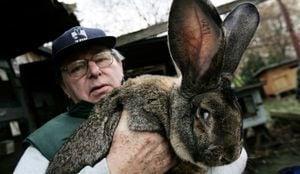 聯合航空又惹禍 稀有巨型兔子死在飛機上