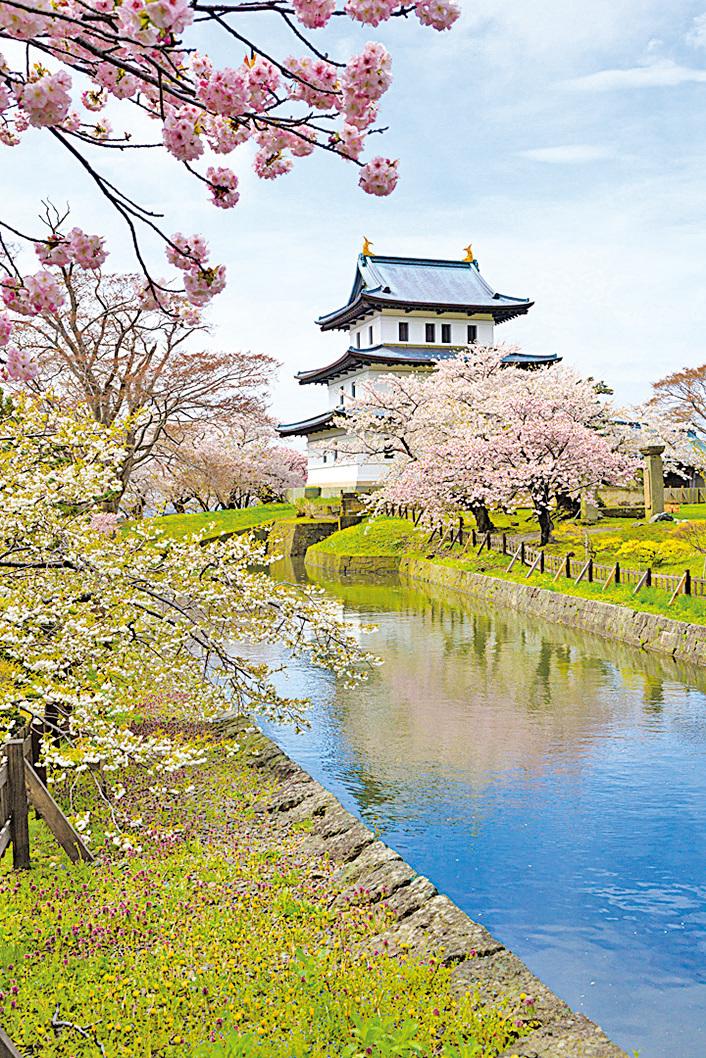 松前公園特點是櫻花種類和株數眾多。