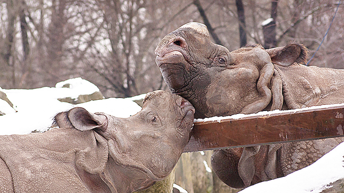 世界自然遺址內的珍貴動物傳出遭盜獵,成為人類一大損失。(Flickr)