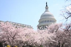 聯航拖人事件驚動國會 高管將接受議員質問
