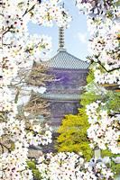 相約花見 日本賞櫻名所之西日本