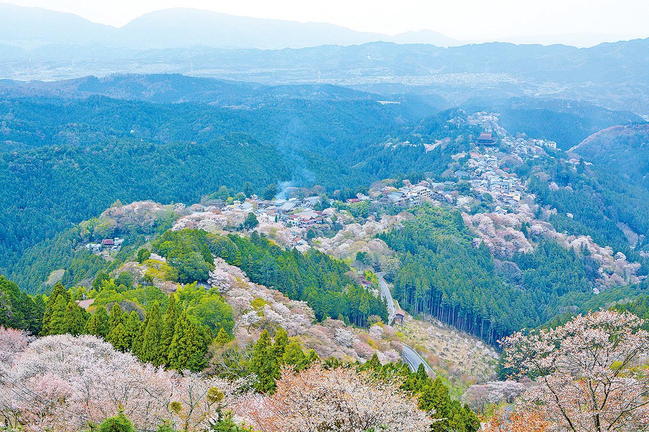 吉野山滿山遍野的櫻花叢林給人以視覺上的震撼。