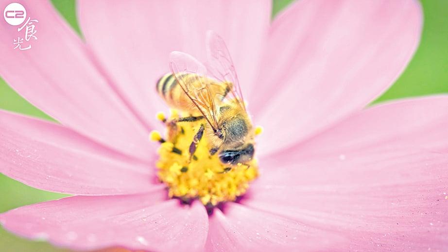 蜜蜂採蜜很緩慢,所以蜂蜜可說是得來不易。