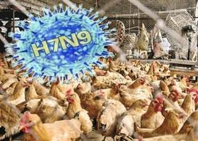 陝西五天內確診三宗H7N9病例 兩人死亡