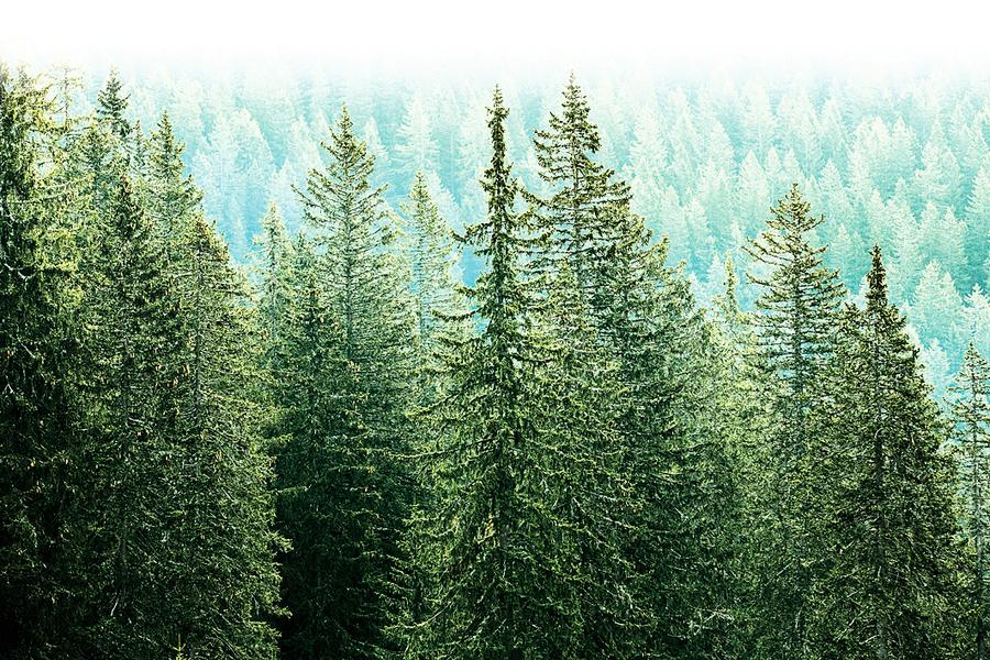 山中歸來不看樹