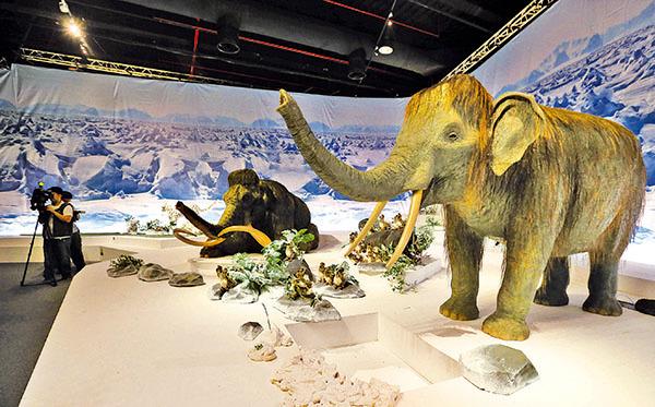 長毛象是在一萬一千年前極速的冰凍中被瞬間凍結在冰層中……長毛象要啟悟現代人甚麼?圖為台灣「冰原奇蹟—史前巨獸.長毛象」特展設置的1:1比例機械長毛象。(中央社)