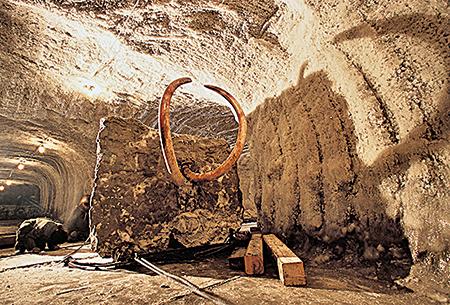 一支國際科學隊在俄國西伯利亞哈坦加城(Khatanga)凍土層洞穴實驗室挖掘長毛象遺骸。(AFP)