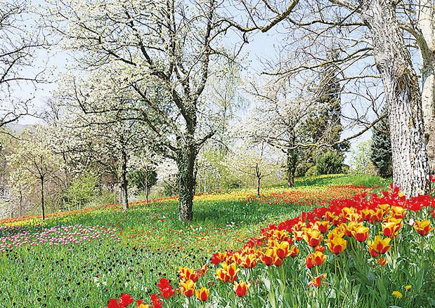 美瑙島為地中海式氣候,繁衍著眾多的南部植被。(維基百科)