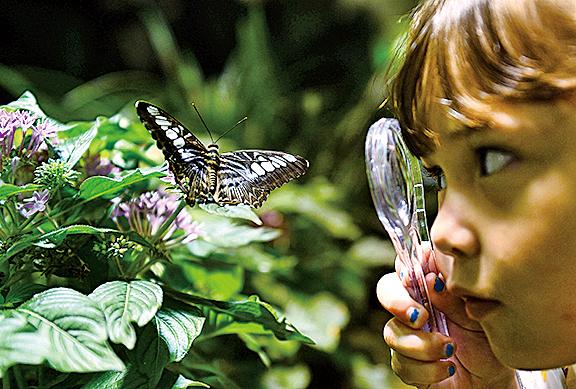 戶外課程讓孩童親近自然