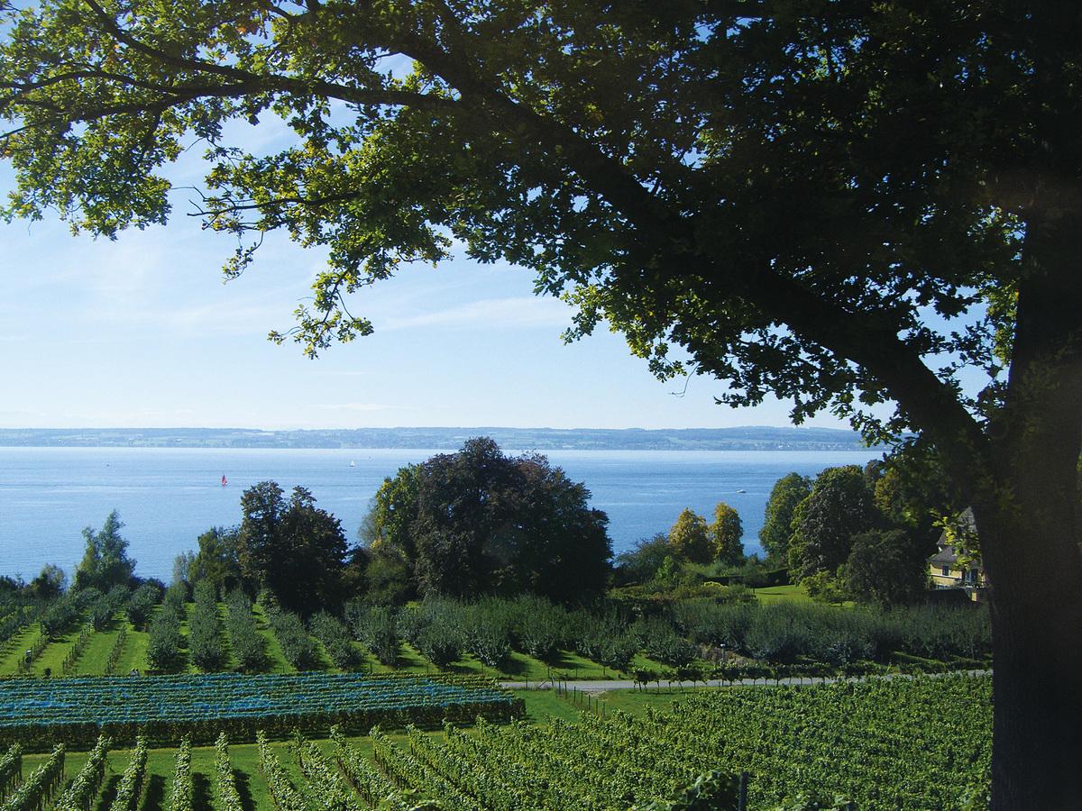 博登湖被稱為萊茵河上游的天然儲水庫,水體澄澈碧藍。這裏氣候溫和,非常適合種植具有異國情調的亞熱帶植物,冬季湖面也很少凍結,四季都是碧水藍天。(網絡圖片)
