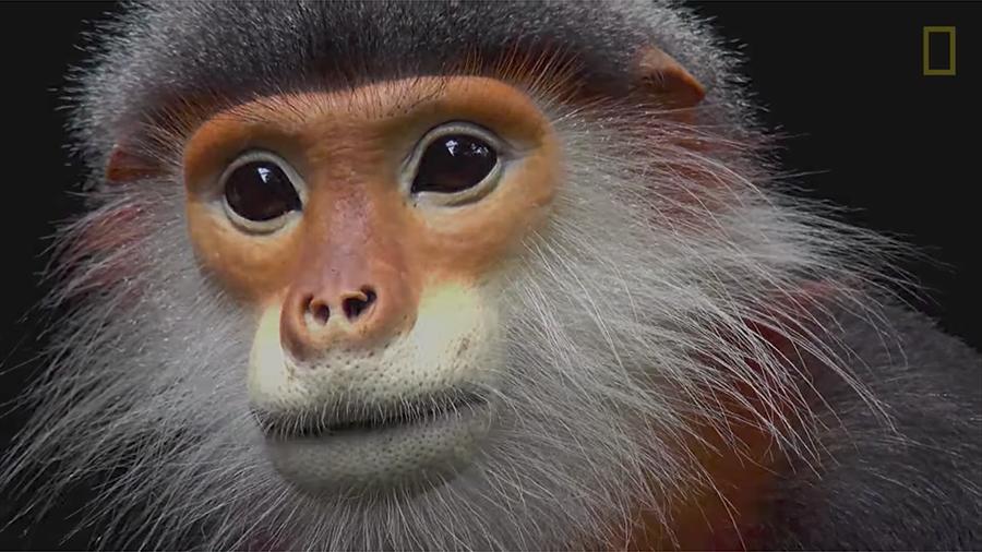 周五(5月19日),紐約時代廣場和其它大城市鬧市區的大屏幕將播放國家地理學會「照片方舟」項目裏的動物。該項目旨在記錄生活在全世界動物園和其它保護區的每一個物種。(視像擷圖)