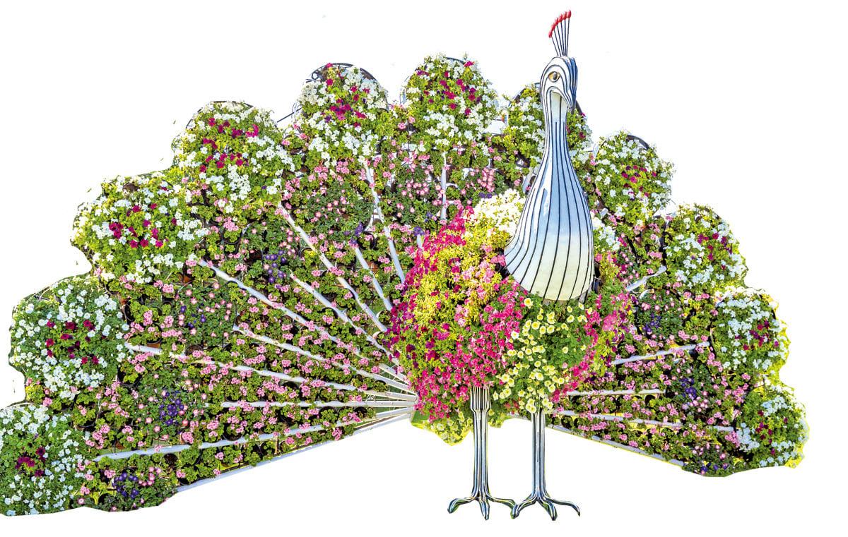 鮮花打造的孔雀雕塑。