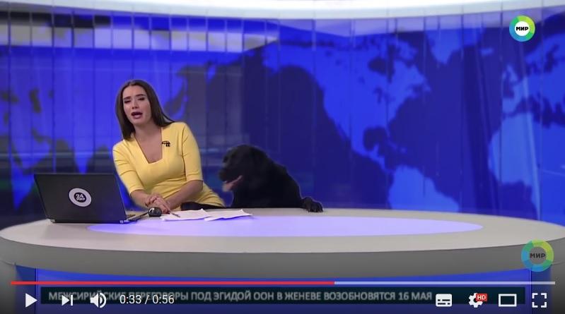 俄羅斯女主持人林納特(Ilona Linarte)日前在報道新聞時,突然有一隻黑狗闖入,搶了她的鏡頭。(視像擷圖)