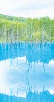 探一窪生命的原色 日本北海道美瑛町青ぃ池