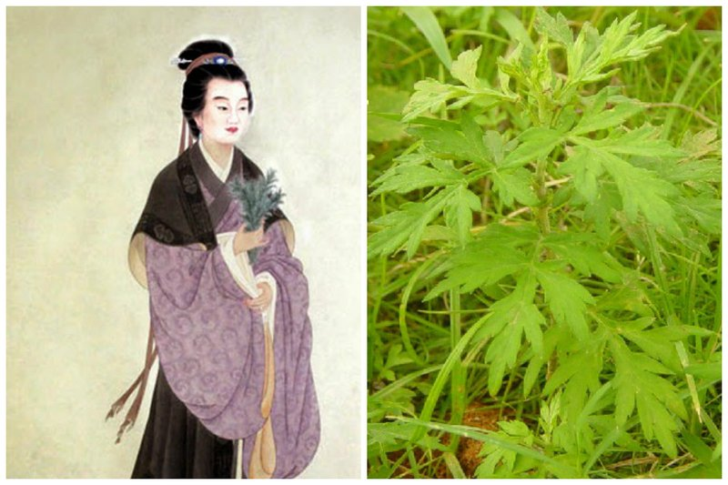 艾草是醫病良藥,而史料有載的第一位用艾葉治病的神醫是晉代的鮑姑。(大紀元合成圖)