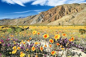 美國加州Anza-Borrego沙漠公園
