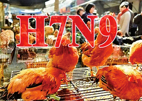 陝西爆禽流感疫情 榆林雞場2萬隻雞暴斃