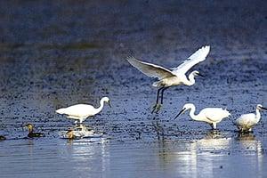 專家:洪水重新設置河流生態系統