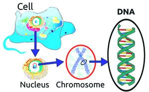 研究:基因技術影響人類繁衍