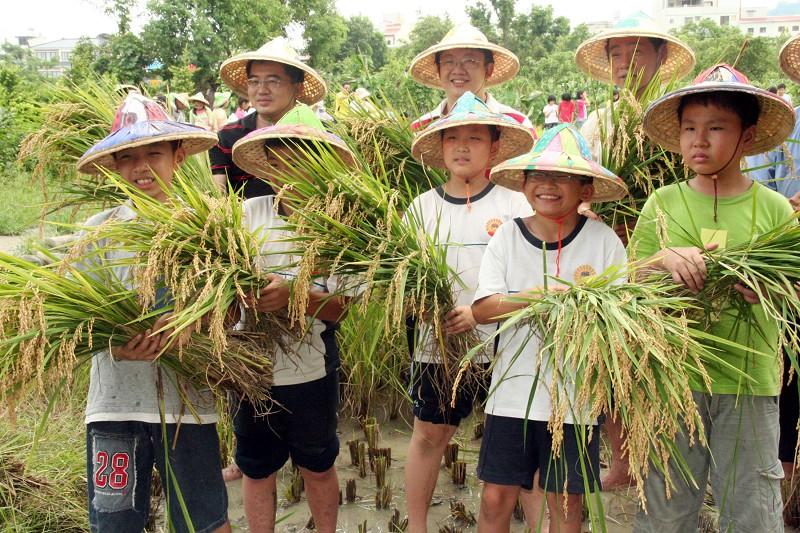 「捧著金黃飽滿的稻穗,感覺真好。」割稻後懂得感恩惜福。(中央社)