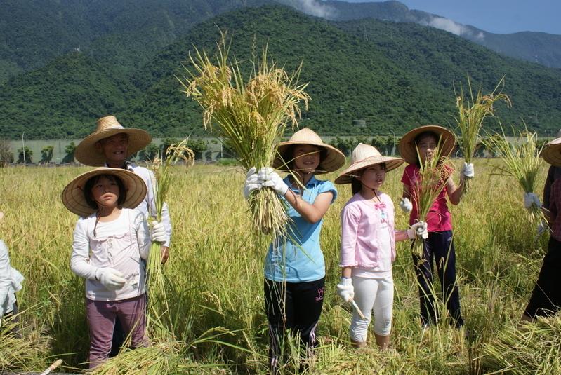 老農友讓小農友拿起一把稻穗,正好就是一碗白米飯量。(詹亦菱 /大紀元)
