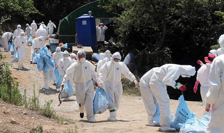 南韓夏季罕見爆發禽流感 發「嚴重」警報