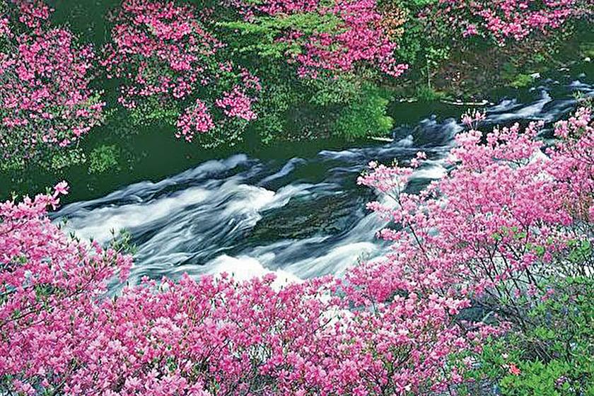 【名句人生】等閒識得東風面 萬紫千紅總是春