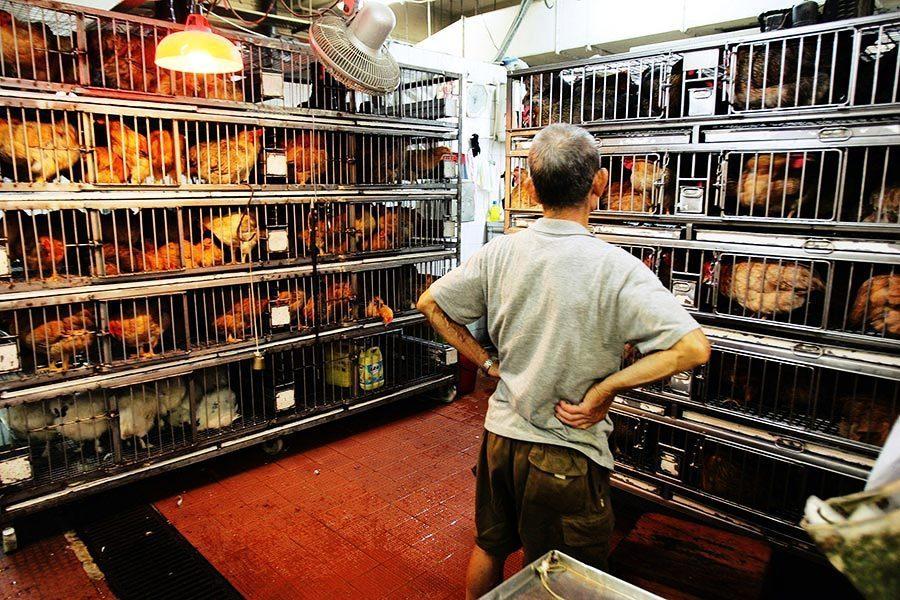 政府同意維持活家禽業銷售現狀