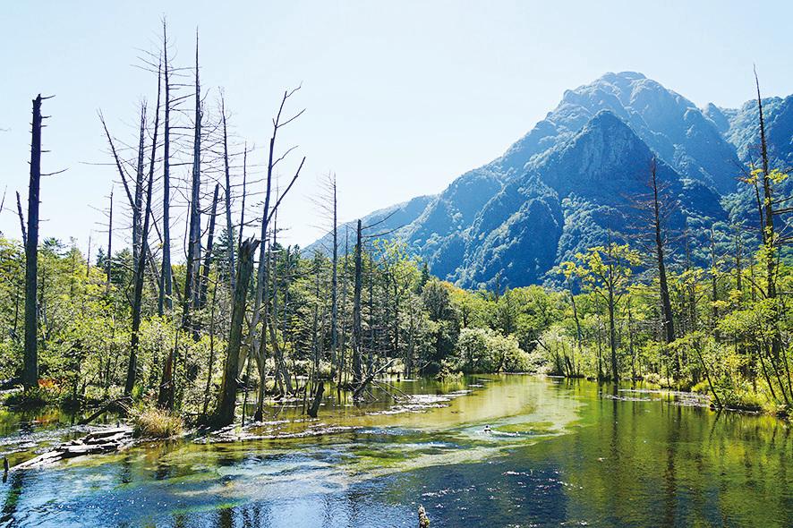 位於上高地的岳澤濕原。(維基百科)