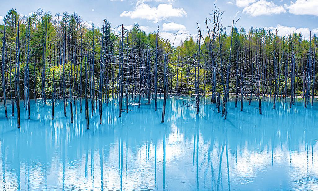富良野附近的「青池」,這裏被稱為絕美秘境,景色會隨著天氣、陽光不同而變化,美得令人窒息。(網絡圖片)