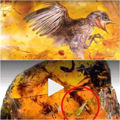 琥珀化石保存了古雛鳥極為豐富的軟組織細節,包括了裸露的耳朵、眼瞼,以及跗骨上極具細節的鱗片。(合成圖片)