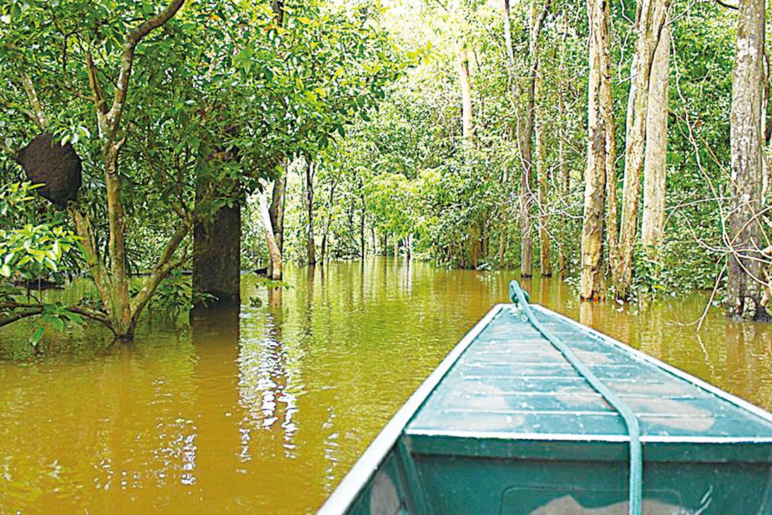 號稱地球之肺的亞馬遜雨林,現在卻面臨急速消失的危機。(Artur Warchavchik/CC/Wikimedia Commons)