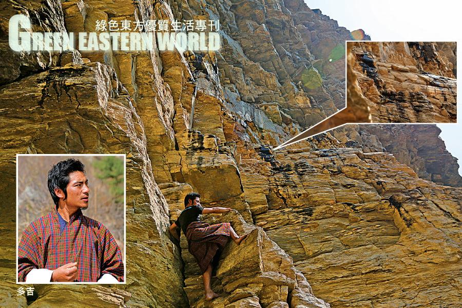 純正的喜來芝來自喜馬拉雅山脈,通常需經2-50年才會再流出。在不丹因獲政府保護,得以保存這珍貴資產至今。