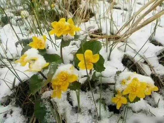 大興安嶺街道兩旁的花草掛滿白雪。(網絡圖片)