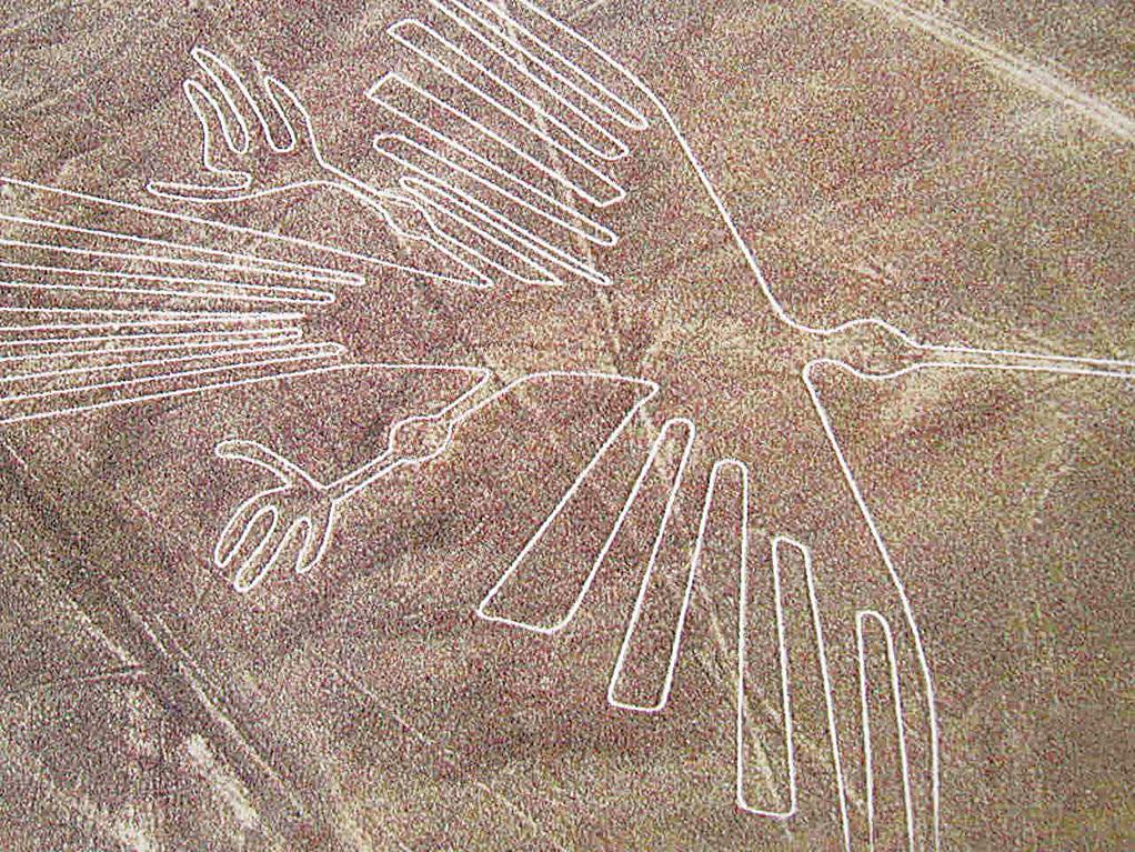 巨大的鳥圖。(網絡圖片)