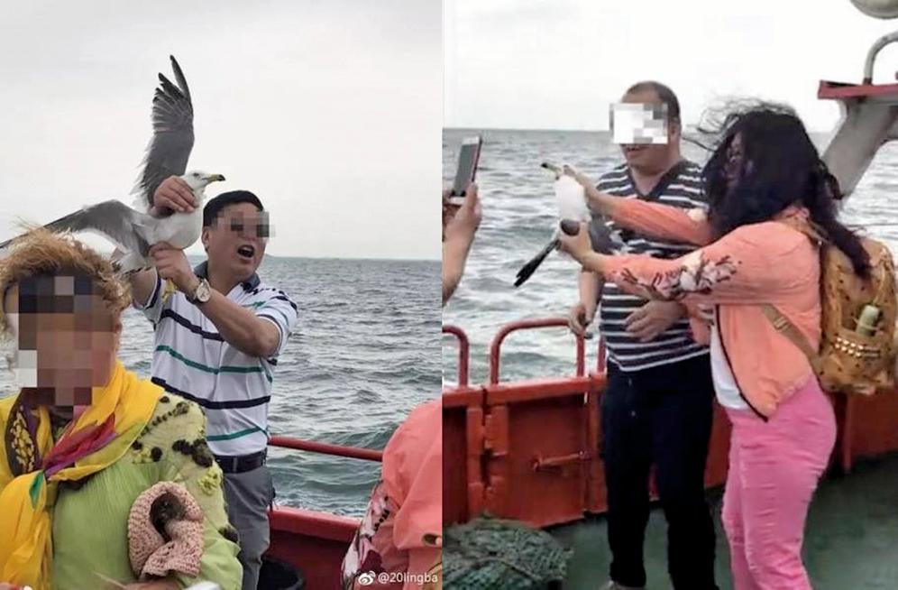 男遊客抓住海鷗,強擰翅膀和雙腿拍照。(網絡圖片)