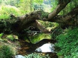 政府擬非原址換地保育沙羅洞