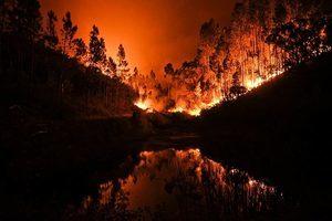 葡萄牙發生嚴重森林大火 最少61人喪生