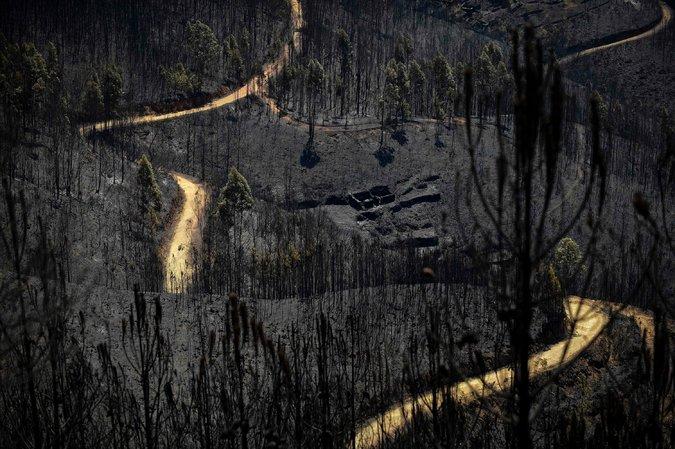 2017年6月20日,葡萄牙距大佩德羅岡30公里的瓦萊迪坎布拉,被山火吞噬的樹林。(MIGUEL RIOPA/AFP/Getty Images)