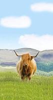 蘇格蘭 追尋喜感的高地牛