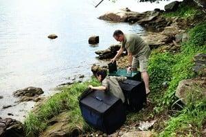 大埔鷺鳥林三隻獲救小白鷺放歸大自然