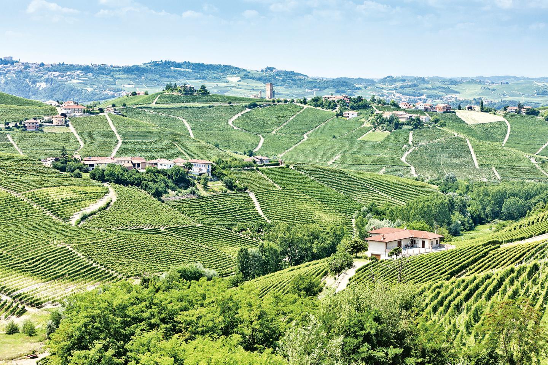 位於意大利西北部的Piedmont葡萄園。