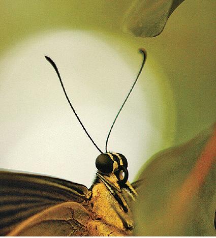 是莊周夢見了蝴蝶,還是蝴蝶夢見了莊周?如果真實是一場夢,我在誰的夢中?(Getty Images)
