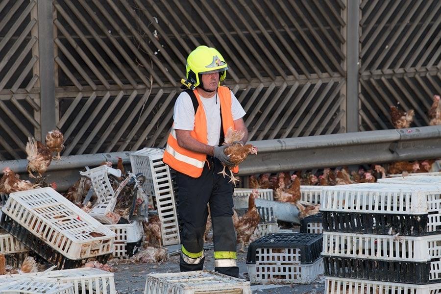 周二(7月4日),一輛載有7500隻雞的貨車在奧地利一條公路上發生撞車事故,導致這些雞將高速公路擋住,現場一片混亂。(FOTOKERSCHI.AT/KERSCHBAUMMAYR/AFP/Getty Images)