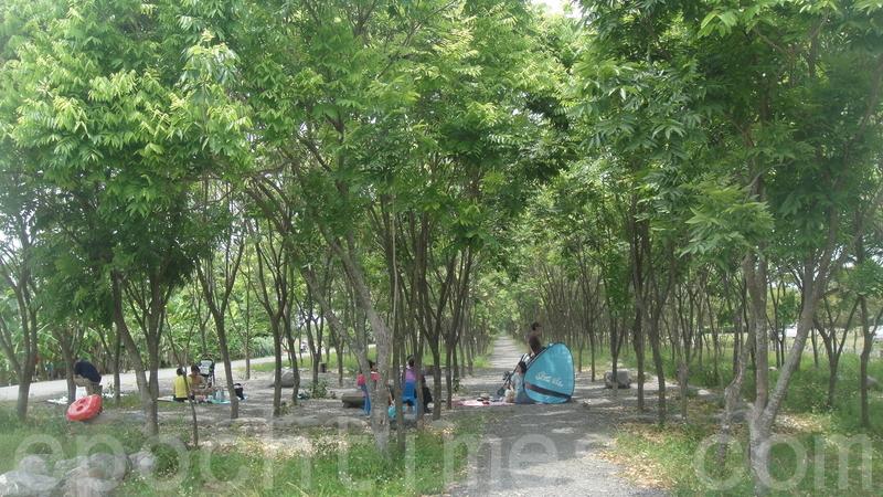 小暑時節多雨多澇,樹木方盛,勿斬伐免天殃。(楊秋蓮/大紀元)